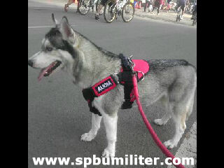 harness anjing red 1